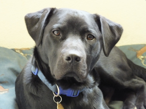 Jango, friendly, lively and often in the office